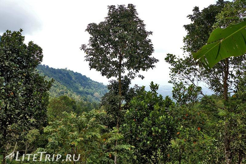 Индонезия. Бали. Водопады Гит-Гит. Джунгли