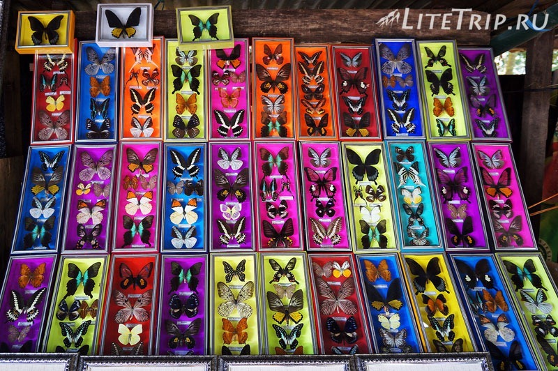 Индонезия. Сулавеси. Национальный парк Бантимурунг - бабочки сувениры.