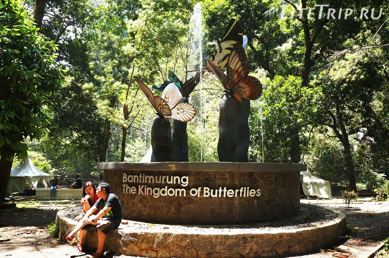 Индонезия. Сулавеси. Национальный парк Бантимурунг -царство бабочек