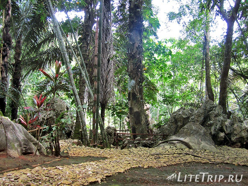 Индонезия. Сулавеси. Тана-Тораджа. Baby Graves. Дерево