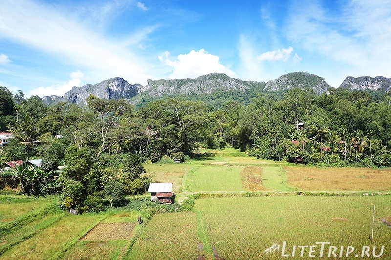 Индонезия. Сулавеси. Тана-Тораджа. Лемо. Рисовые поля