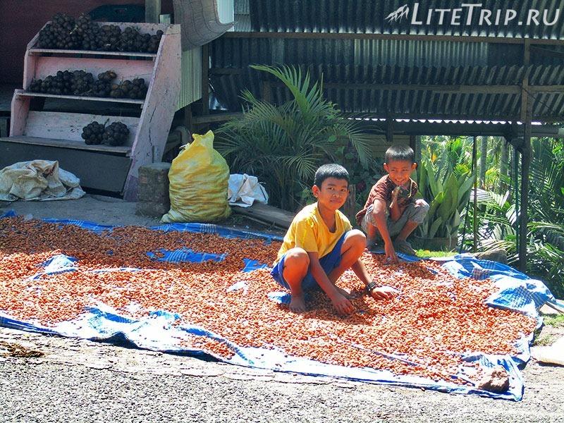 Индонезия. Сулавеси. Автостопом до Тана-Тораджа. Мальчики