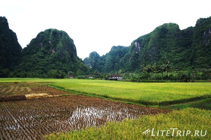 Индонезия. Сулавеси. Рамман-Рамман. Деревня Kampung Berua. Рисовые поля.
