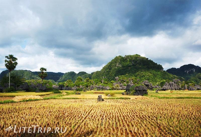 Индонезия. Сулавеси. Рамман-Рамман. Каменный лес