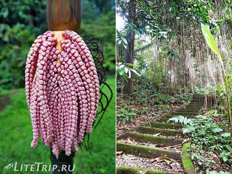 Индонезия. Ява. Богор. Ботанический сад - дорожки