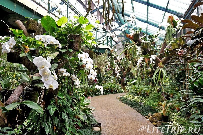 Индонезия. Ява. Богор. Ботанический сад - оранжереи
