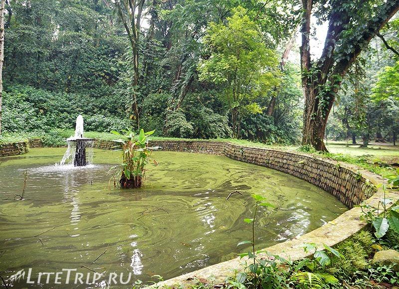 Индонезия. Ява. Богор. Ботанический сад - пруд