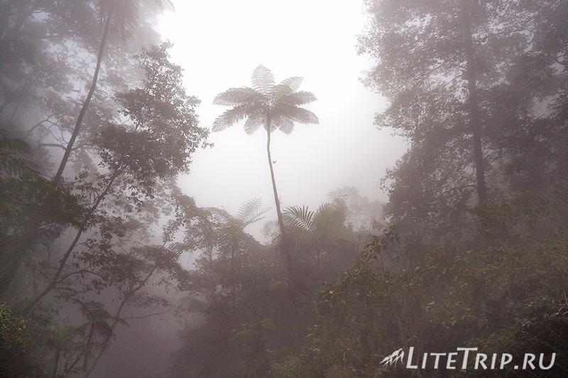 Индонезия. Ява. Богор. Заповедник горы Салак - туман.