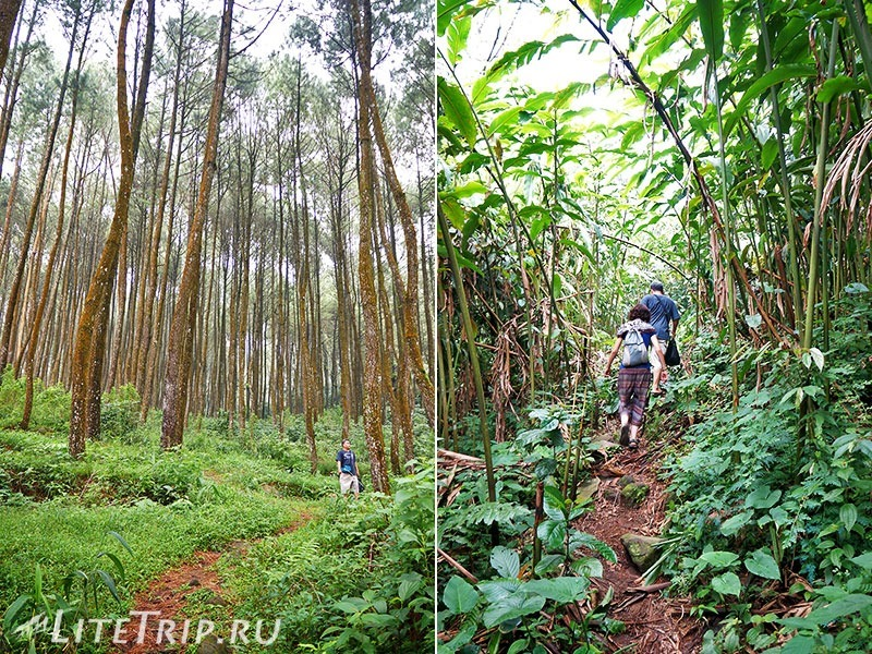 Индонезия. Ява. Богор. Заповедник горы Салак - подъем.