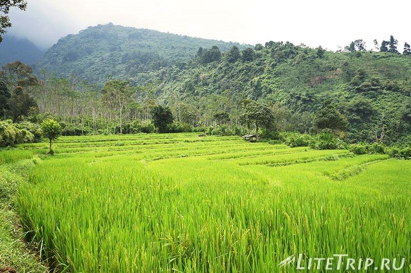 Индонезия. Ява. Богор. Заповедник горы Салак. Рисовые поля.