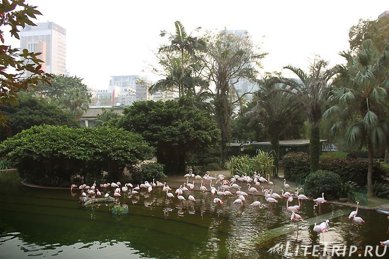 Гонконг. В парке Коулун красивые фламинго.
