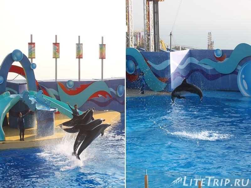 Гонконг. Ocean Park. Шоу дельфинов.