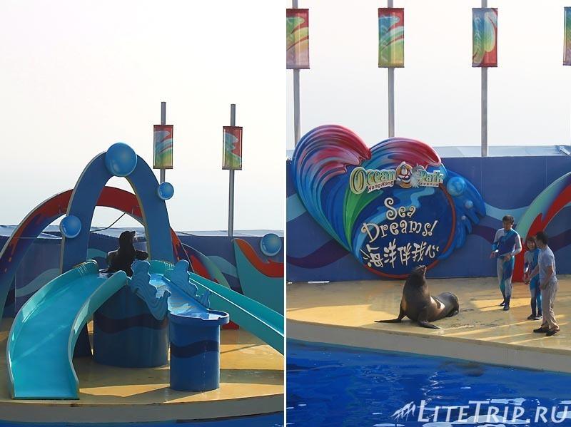 Гонконг. Ocean Park. Шоу дельфинов - тюлени.
