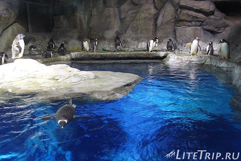Гонконг. Ocean Park. Павильон Polar Adventure с пингвинами.