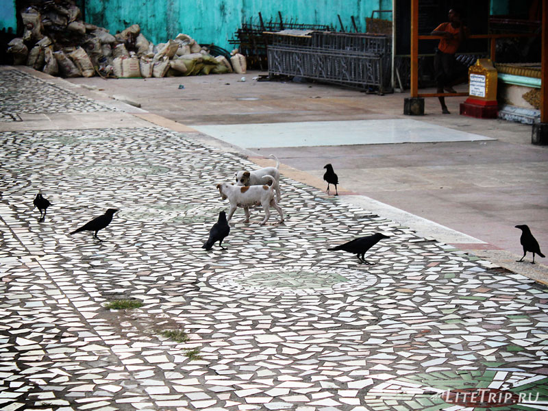Щенята играют в салки с воронами в Янгоне