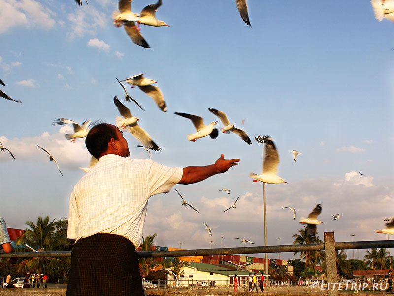 Чайки на янгонском пирс рядом с Пагодой Botahtaung