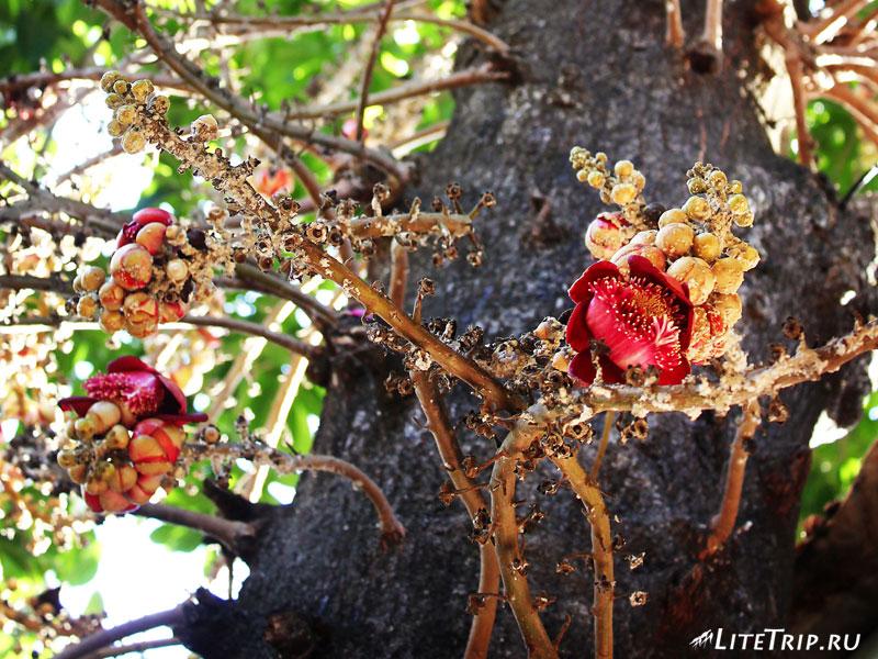 Растение в монастыре Чак-хавин в Пегу (Баго)