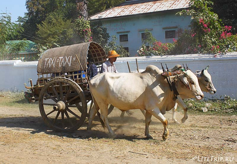 Мингун. Такси на быках.