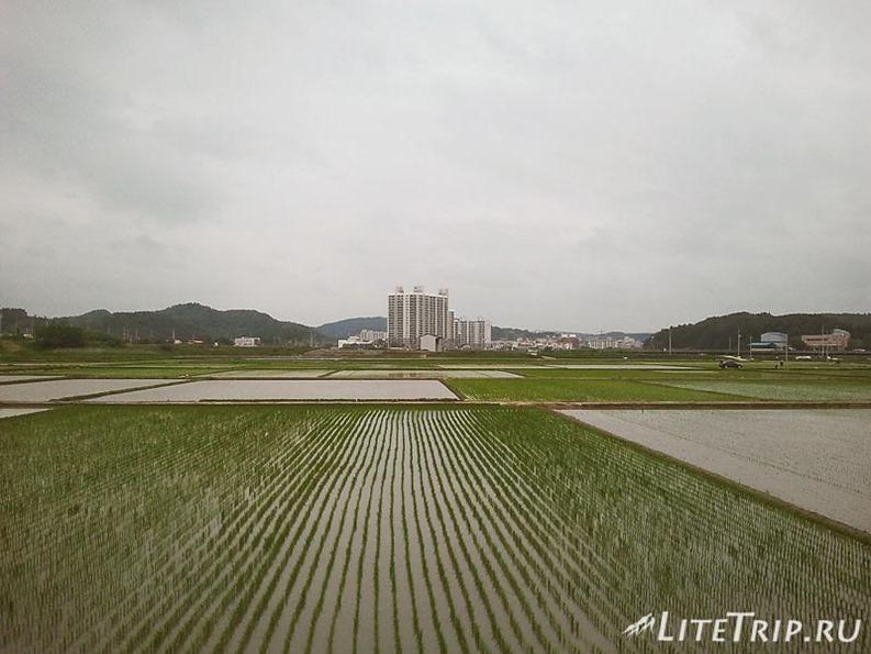 Южная Корея. Рисовые поля.