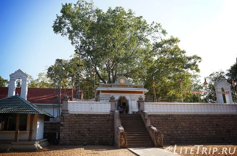 Шри-Ланка. Анурадхапура. Дерево Джая Шри Маха Бодхи (Sri Maha Bodhi)