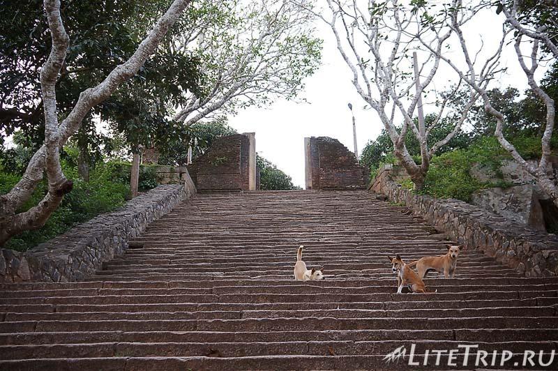 Шри-Ланка. Монастырь Михинтале - собаки на лестнице.