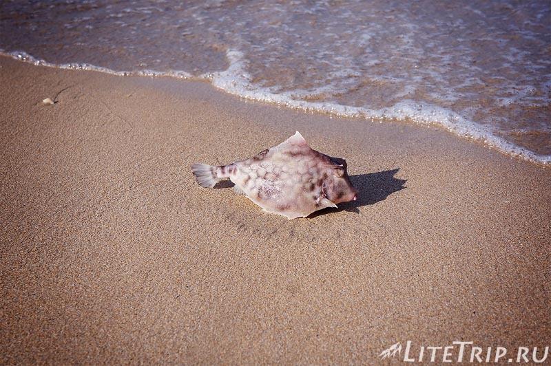 Шри-Ланка. Тринкомале - рыба на берегу.