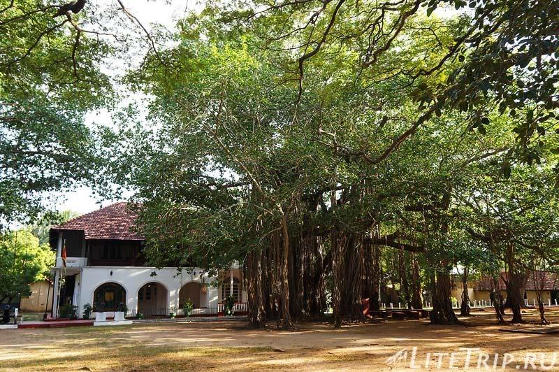 Шри-Ланка. Тринкомале - территория форта Фредерик.