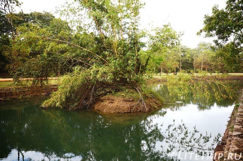 Шри-Ланка. Сигирия. Заросшие королевские пруды.