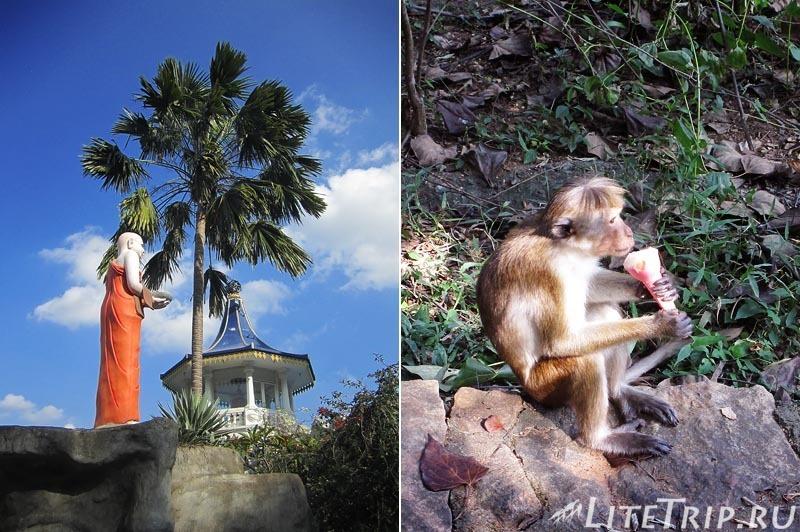 Шри-Ланка. Золотой храм в Дамбулле. Обезьяны.