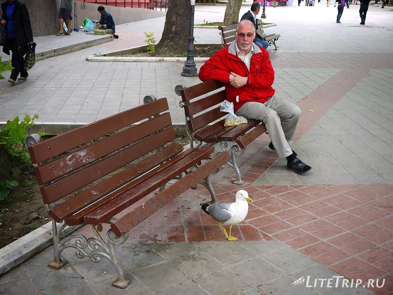 Болгария. Варна - чайки