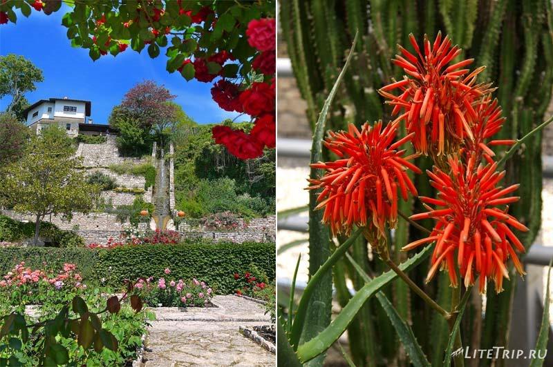 Болгария. Балчик - цветы Ботанического сада