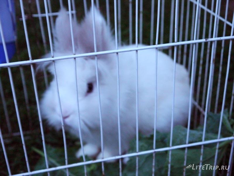 Черногория. Домашний кролик в Подгорице.