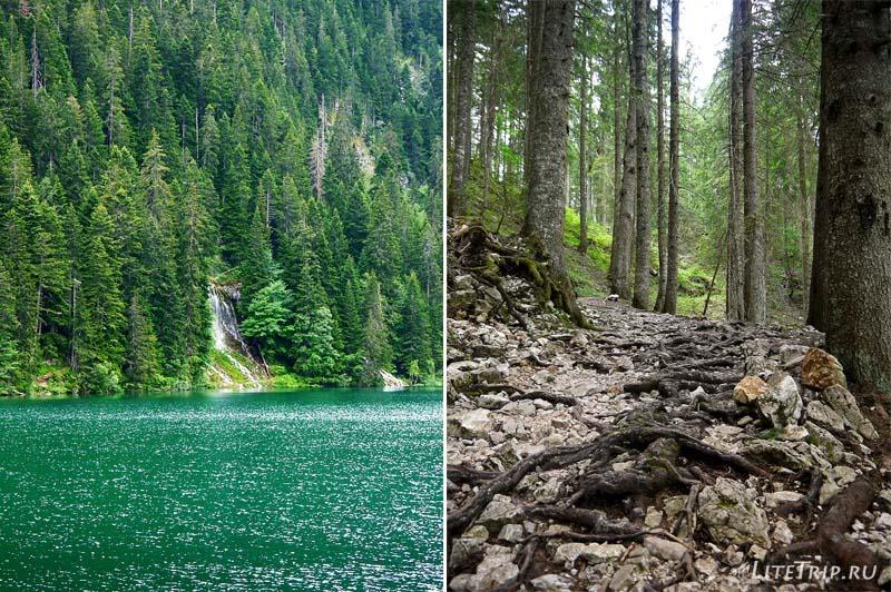 Черногория. Парк Дурмитор - тропа к водопаду.