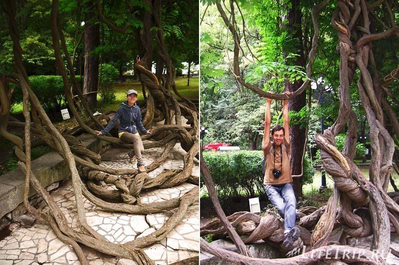 Грузия. Парк Боржоми - ветвистое дерево.