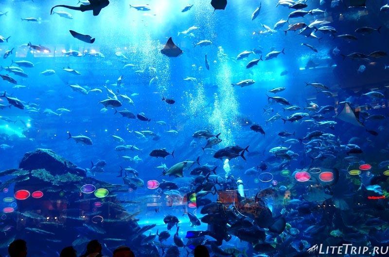 ОАЭ. Дубай Молл - большой аквариум.
