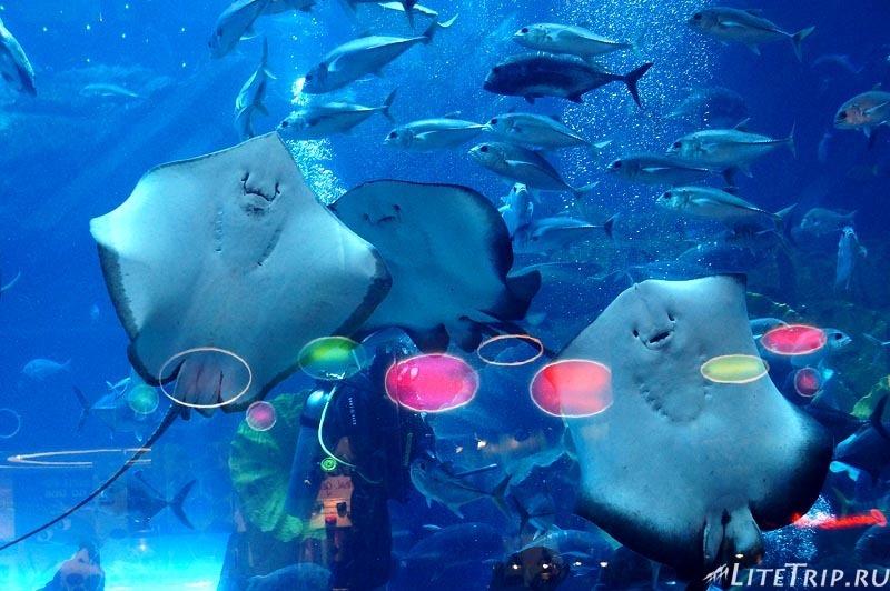 ОАЭ. Дубай Молл - скаты в аквариуме.