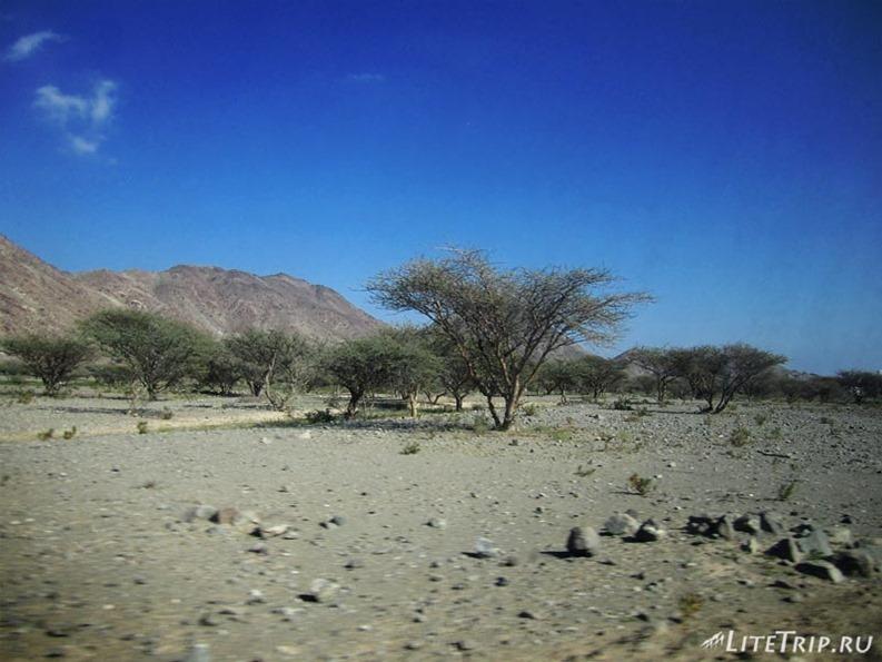 ОАЭ. Фуджейра - в поисках садов Айн-Аль-Мадхаб