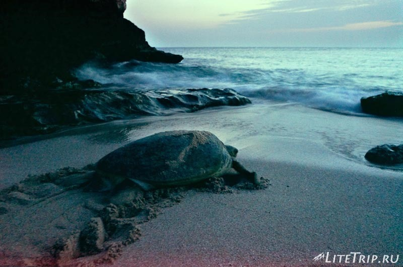 Оман. Рас Аль Джинз. Бесплатный черепаший пляж - к воде.
