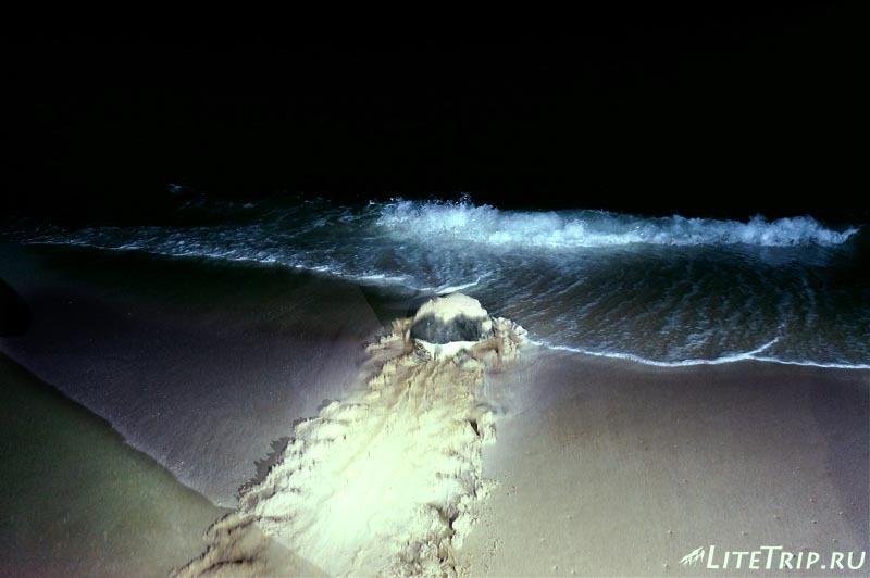 """Оман. Рас Аль Джинз. Экскурсия по """"черепашьему раю""""."""