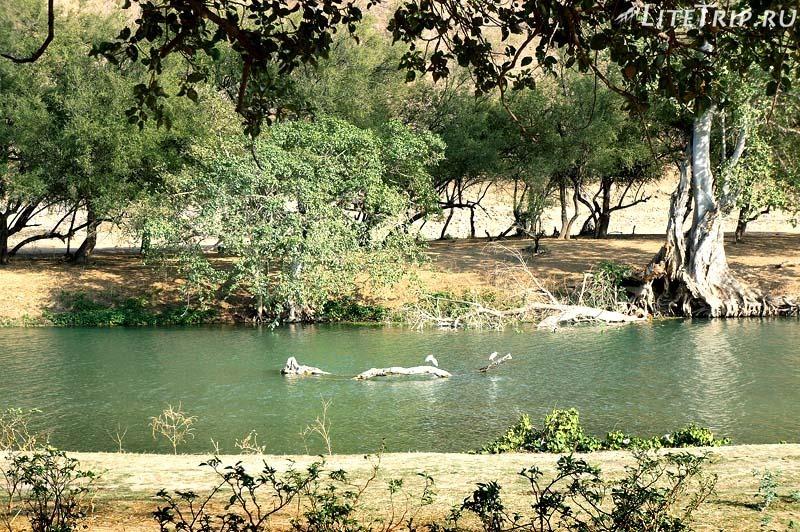 Оман. Салала. Вади Дарбат - река.