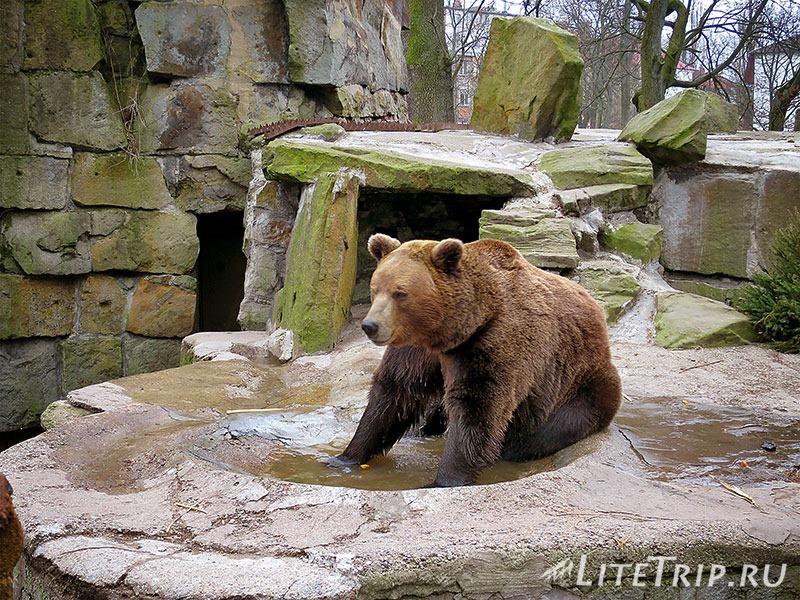 Калининградский зоопарк. Медведь.
