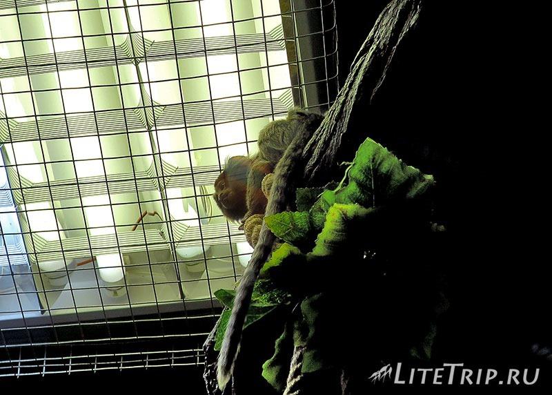 Калининградский зоопарк. Маленькие обезьяны.
