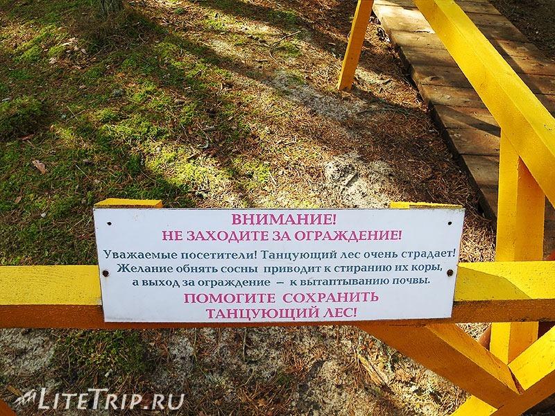 Калининград. Куршская коса. Танцующий лес - табличка