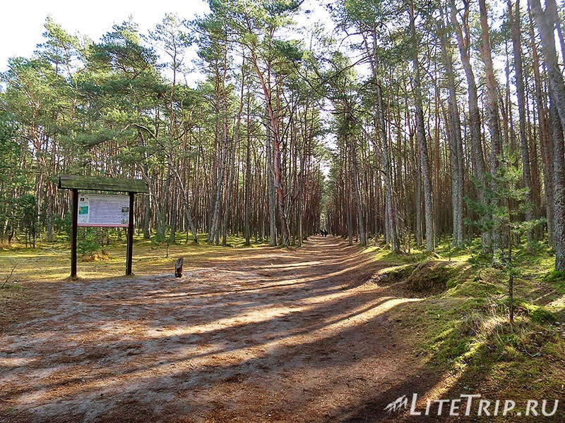 Калининград. Куршская коса. Танцующий лес - вход