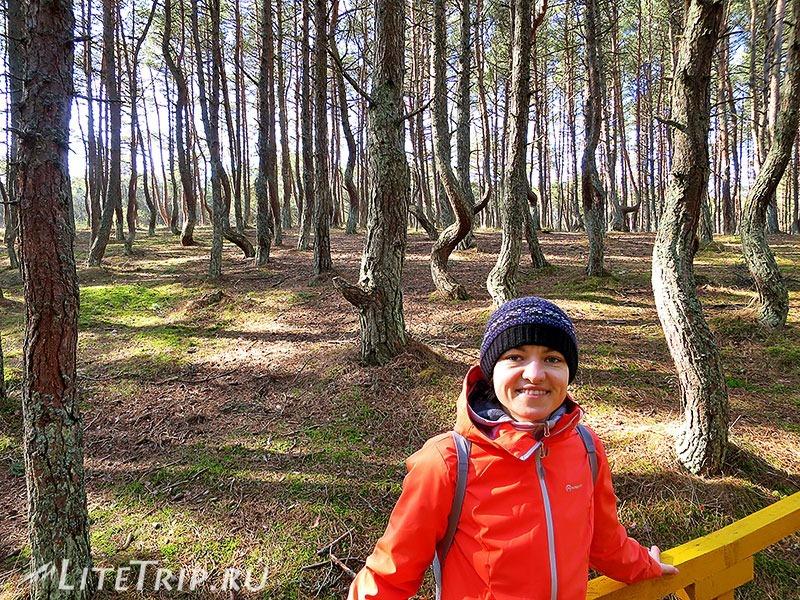 Калининград. Куршская коса. Танцующий лес