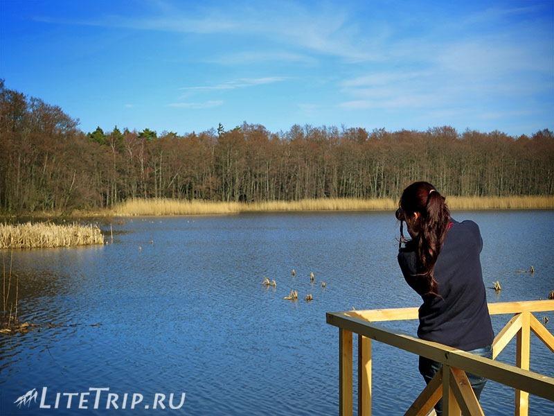 Калининград. Куршская коса. Высота Мюллера. Озеро Чайка - фотограф.