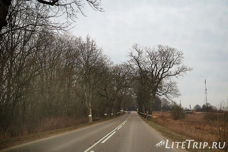 Калининградская область. Дорога из Балтийска в Светлогорск. Деревья на обочине.