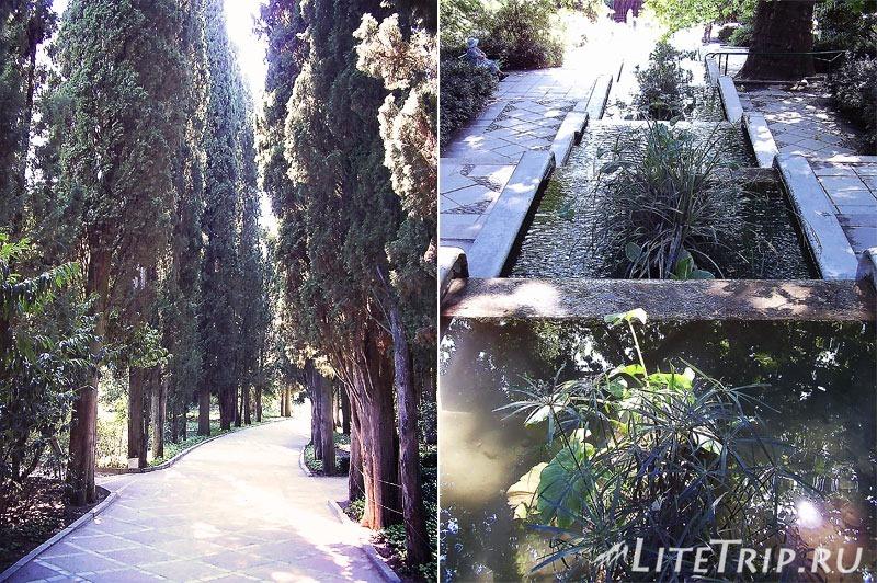 Крым. Никитский ботанический сад. Аллея.
