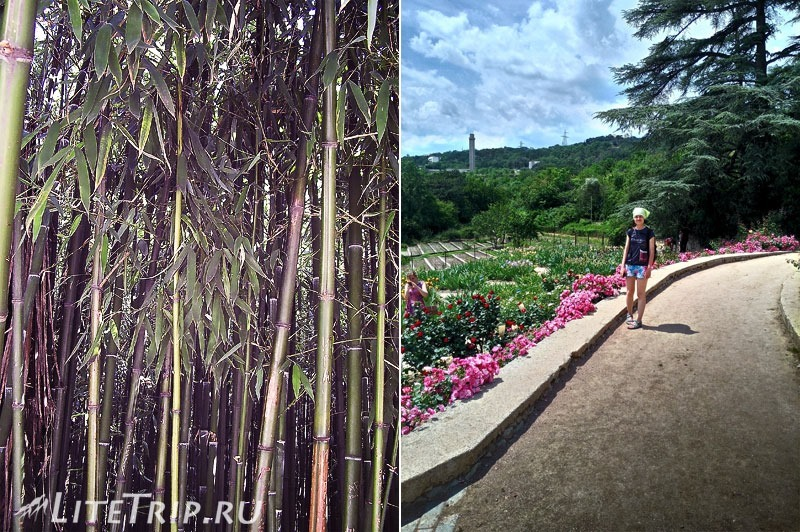 Крым. Никитский ботанический сад. Бамбуковая аллея.