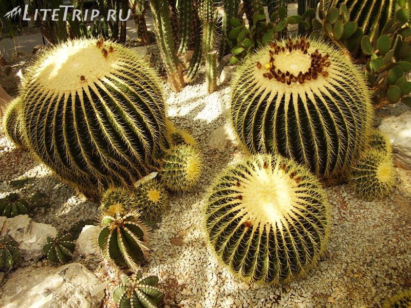 Крым. Никитский ботанический сад. Кактусы
